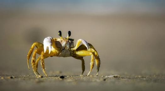 crab-1990198_1280